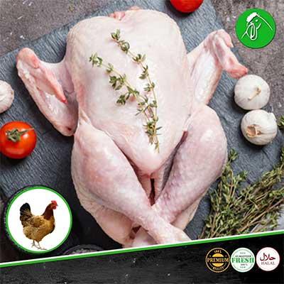 free-range-chicken-products
