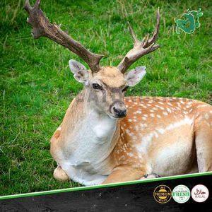 deer meat in dubai
