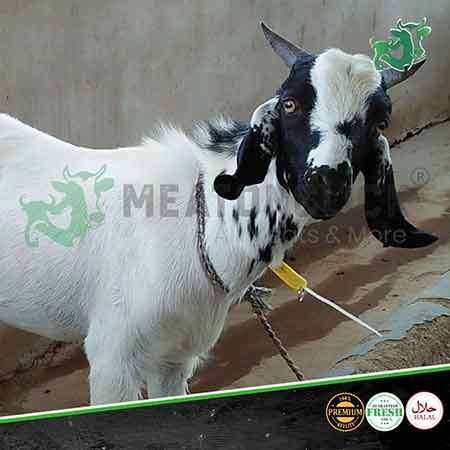 indian-goat-1-meatonclick