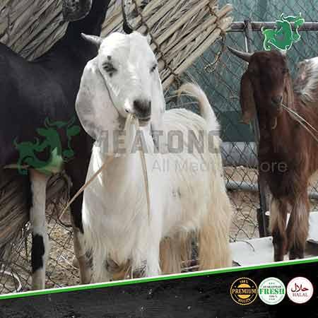 pakistani-goat-meatonclick